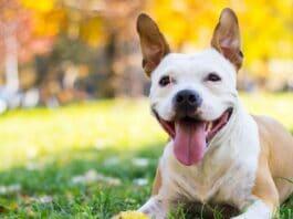 loving happy dog